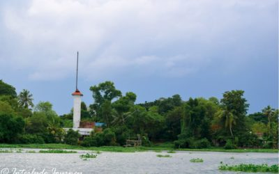Kochi Backwaters Cruise- A Lesson in Ornithology and Ecology